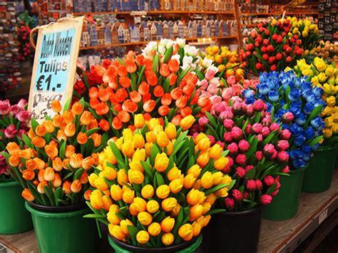 amsterdamse bloemen tulpen flower market in amsterdam amsterdam markets