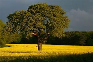 Quel Arbre Planter Près D Une Maison : comment planter un arbre sur son terrain soumission ~ Dode.kayakingforconservation.com Idées de Décoration