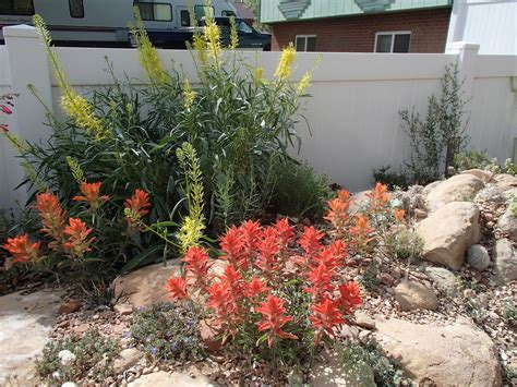 xeriscape plant list i need a cup of tea the quot total quot xeriscape in colorado what s bad about unirrigated landscapes