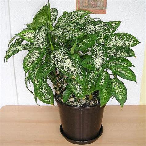 plante pour le bureau quelles plantes pour le bureau liste ooreka