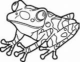 Frog Coloring Pages Realistic Wecoloringpage Clipartmag Jumping sketch template