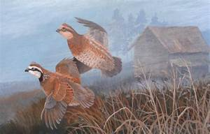 Old Home Place pair of Quail in flight original wildlife