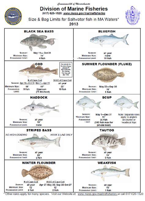 Cape Cod fishing regulations 2