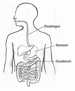 Diagram Of Upper Digestive System Gallery - How To Guide ...
