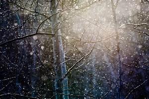 blizzard | Christopher Martin Photography