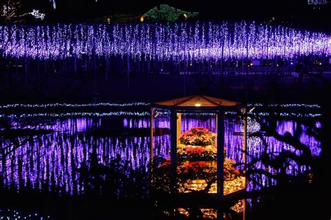 joe pool christmas lights joe s japan travel journal seasonal illumination ashikaga flower park