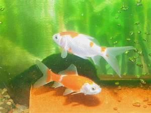 Koi Händler In Meiner Nähe : kamillo aquarium koi flusskrebse ~ Orissabook.com Haus und Dekorationen