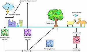 Water Cycle With Diagram For Class 7