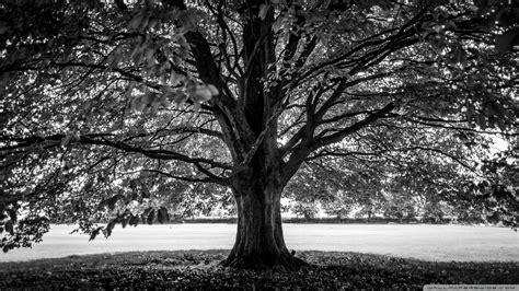 Under the Tree Black and White 4K HD Desktop Wallpaper