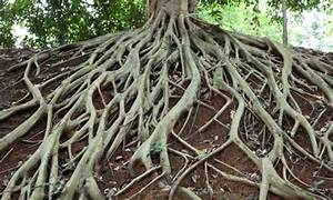 New Research Shows Tree Roots Regulate CO2, Keep Climate ...