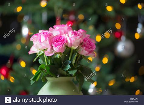 blühende blumen das ganze jahr rosa und einen weihnachtsbaum au 223 erhalb der saison