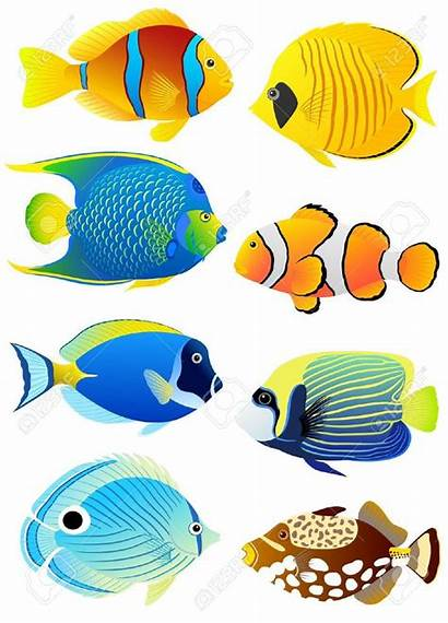 Fish Clipart Cliparts Solid Tropical Colorful Illustration