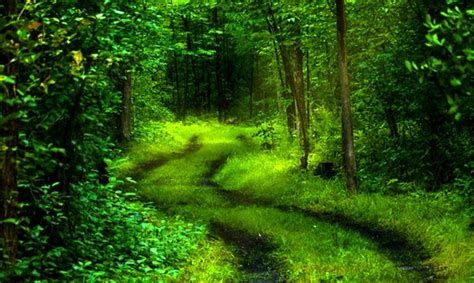 Best 28  10 High Res Beautiful Green  Hd Wallpapers