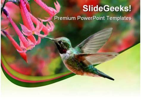 humming bird animals powerpoint templates  powerpoint