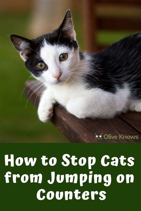 stop cats  jumping  counters kids