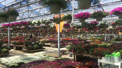 Petitti Garden Centers petitti garden centers closes one of its nine locations