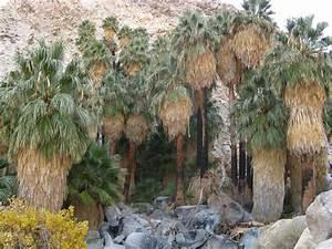 49 Palms Oasis Joshua Tree National Park Hazy Day At