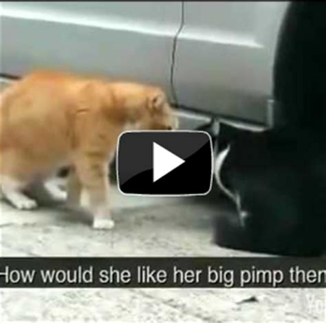 Funny Cat Videos Youtube Daily Pictures