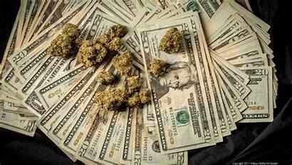 Marijuana Weed Stacks Lots Cannabis Money Warden