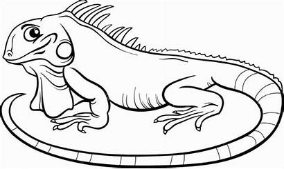 Iguana Clipart Colouring Coloring Webstockreview Honey Lobster