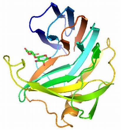 Xylanase Enzyme Structure Enzymes Families Dimensional Three