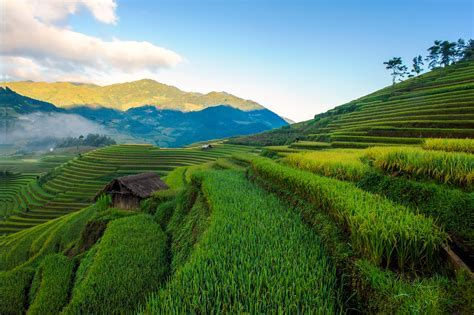 Terraced rice fields of ethnic people in Mu Cang Chai