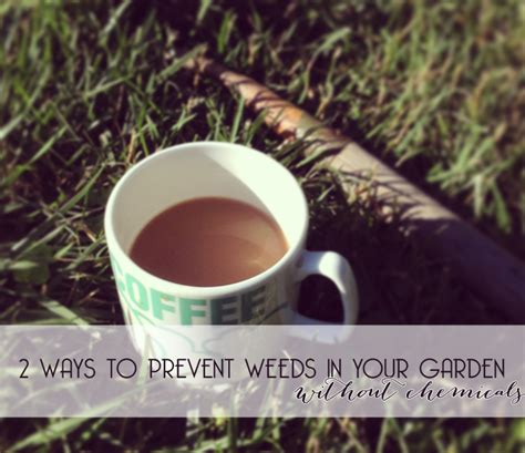 prevent weeds in garden how to prevent weeds in your garden without chemicals our little apartment