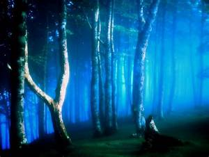 Magical Forest - Forests & Nature Background Wallpapers on ...