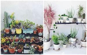 Plante De Salon : plantes d 39 int rieur d corez avec des plantes vertes d and interieur ~ Teatrodelosmanantiales.com Idées de Décoration
