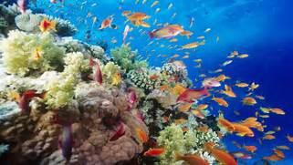 underwater coral reef southern 1920x1080 wallpaper Art HD Wallpaper  Coral Reef Wallpaper 1920x1080