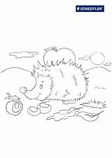 Hedgehog Coloring Pages Print Animals Shark Olds Coloringtop sketch template