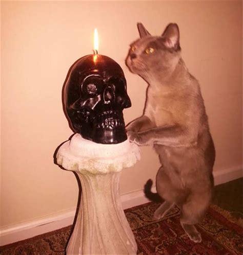 proof  cats  pure evil  pics
