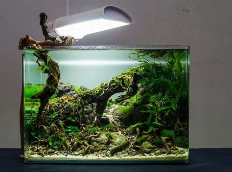 images  planted nano tanks  pinterest
