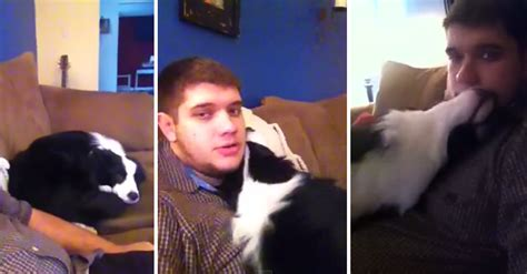 smartly things bed fan dog tears up his bed now watch what he does to apologize