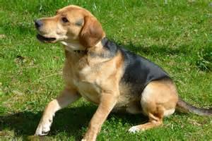 hund sofa 10 erziehungstipps für hunde tiermedizinportal