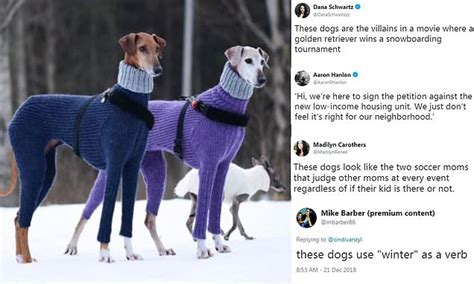 Photo Of Stuck-up Dogs In Turtlenecks Gets Funny Captions