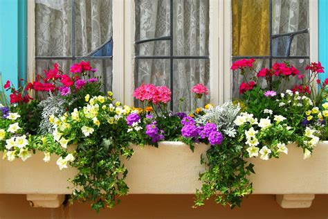 Best Window Plants by How To Plant Window Boxes 10 Simple Tips Reader S Digest
