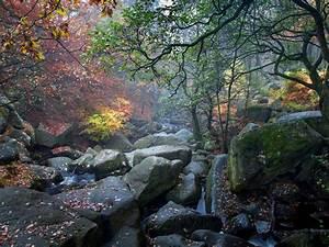 Nature, United, Kingdom, Autumn, Dol, Stream, Rocks, Rocks, Forest