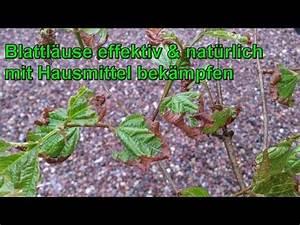 Spinnmilben Natürlich Bekämpfen : blattl use wie bekomme ich die weg teil 2 nat rlich doovi ~ Buech-reservation.com Haus und Dekorationen