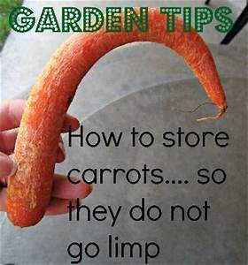 How to store carrots from the garden so they dont go for How to store carrots from the garden