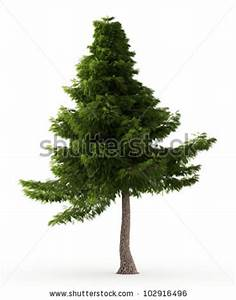 Cedar Tree Stock Images, Royalty-Free Images & Vectors ...