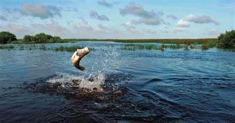 fish species fishing northern territory australia