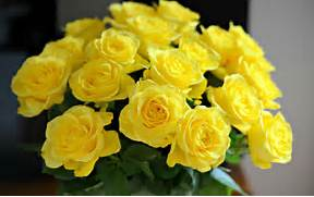 beautiful yellow roses widescreen hd wallpaper  Beautiful Pictures Of Yellow Roses