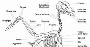 Body Skeletal System Diagram