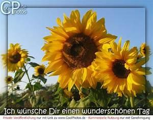 Schönen Freien Tag Bilder : ich w nsche dir einen wundersch nen tag ~ Eleganceandgraceweddings.com Haus und Dekorationen