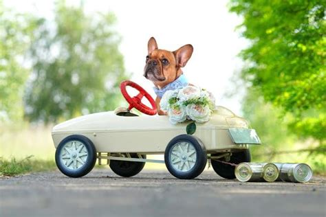 rover the ring bearer how to train a dog for your wedding
