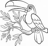 Coloring Paradise Birds Pages Bird Toucan Flowers Prey Printable Adult Easy Getcolorings Cute Print Getdrawings Colorings Little sketch template