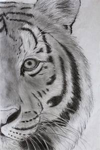 Tiger Drawings | Old tiger drawing. by Maddie-Marie ...