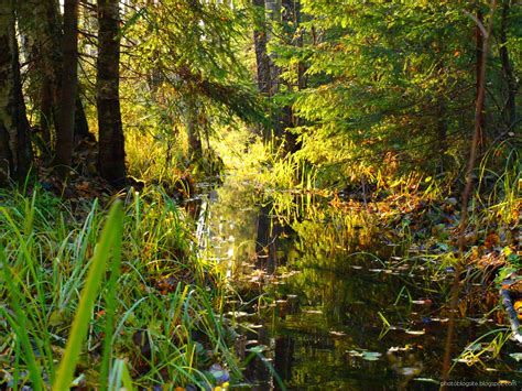 Rudens, mežs, peļķes - PhotoBlogSite