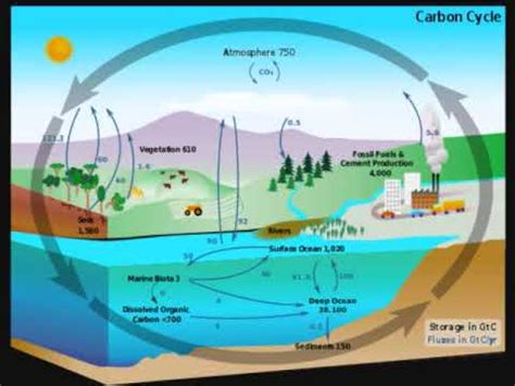 carbon cycle science project   youtube